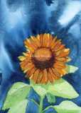 Danniel's Sunflower