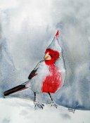 Western Cardinal