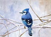 Winter Blue Jay