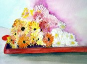 Daisies In Tray