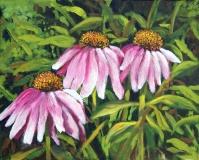 eb -cone-flowers