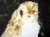 Fuzzy Cat