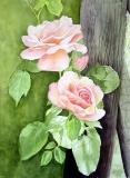 Auriel Roses