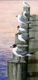 Seagulls On Pier
