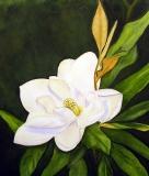 Single Magnolia