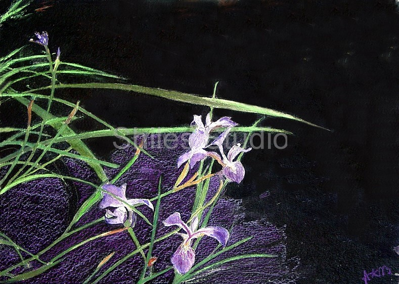 Iris Over Water