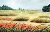 ba grasses