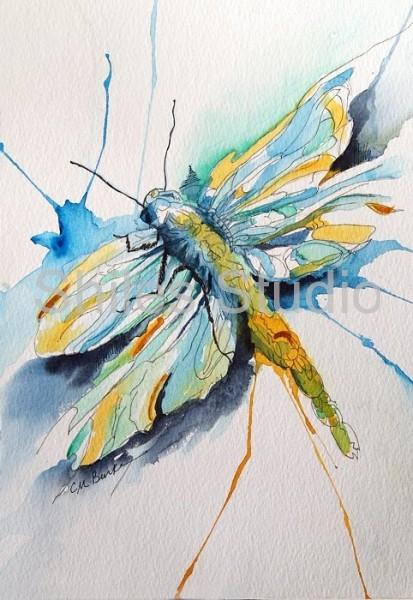 bc dragonfly