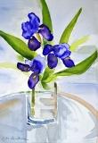 Blue Iris In Vase