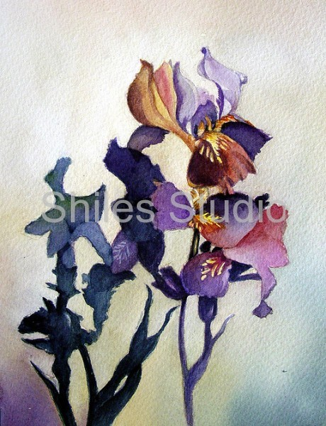 Iris And Shadows