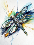 ce dragonfly