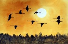 Sunset Herons