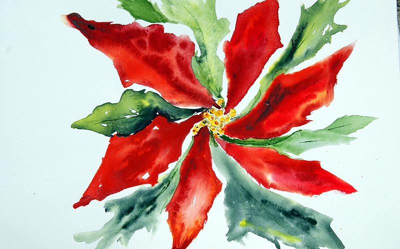 Poinsettia 2009