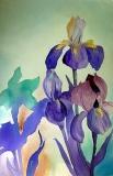 Iris Collage