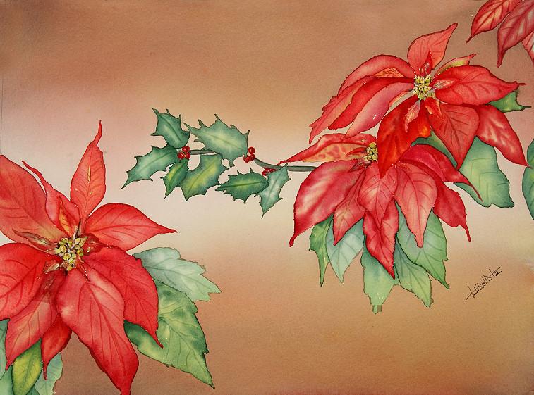 Christmas Ponisettias 2