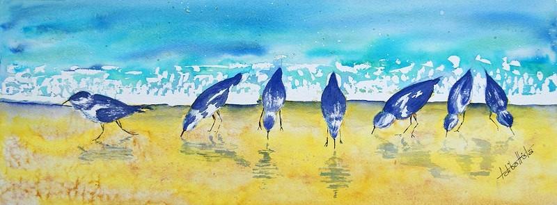 td shorebirds