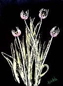 Tulip Xray
