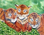 Three Tiger Cubs