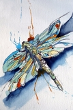 hj dragonfly