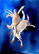 Crabs In Blue