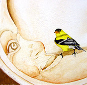 Goldfinch In The Moon