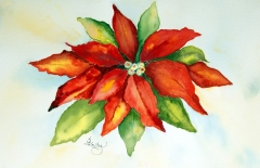 Sues Poinsettia