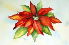 Sues Poinsettia