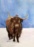 Hamish the Scottish Cow