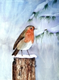 English Christmas Robin
