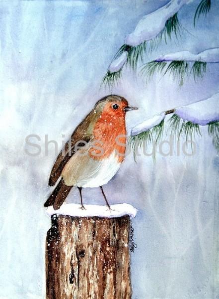 English Christmas Robin