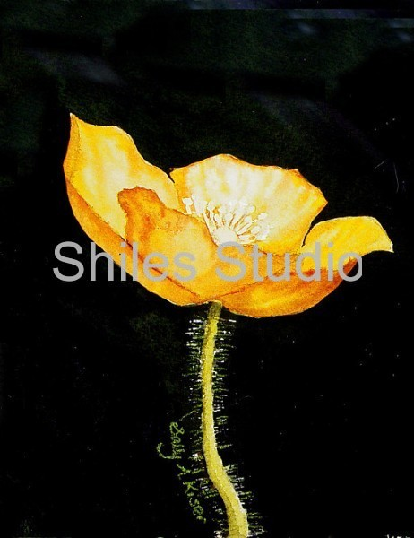 Yellow Poppy 2
