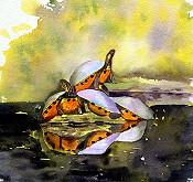Spring Island Turtles