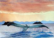 Sunset In Alaska