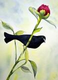 al_black_bird