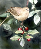Bird And Berries