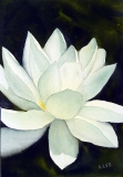 Little Water Lily