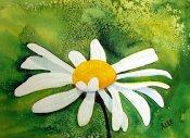al_one_daisy