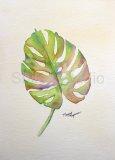 Leaf Study 3