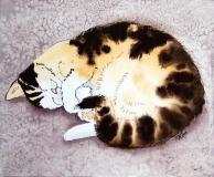 rmm cat nap