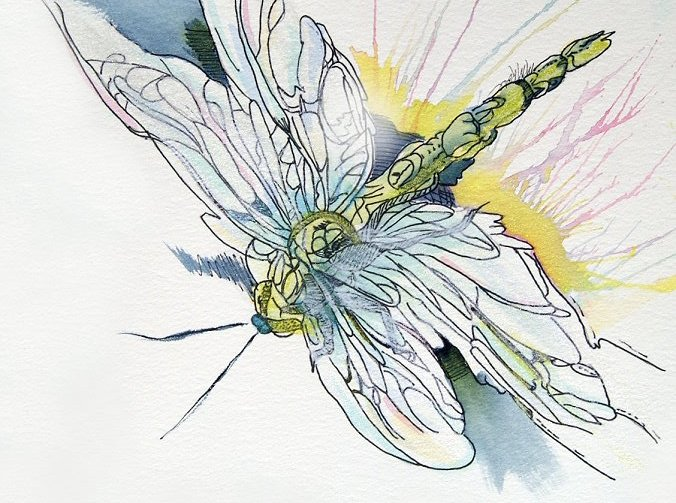 rmm lovelydragonfly