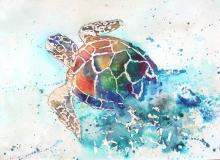 Emerging Turtle