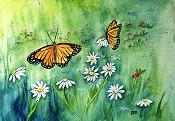 Butterflies 2013