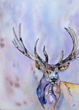 Fantasy Buck