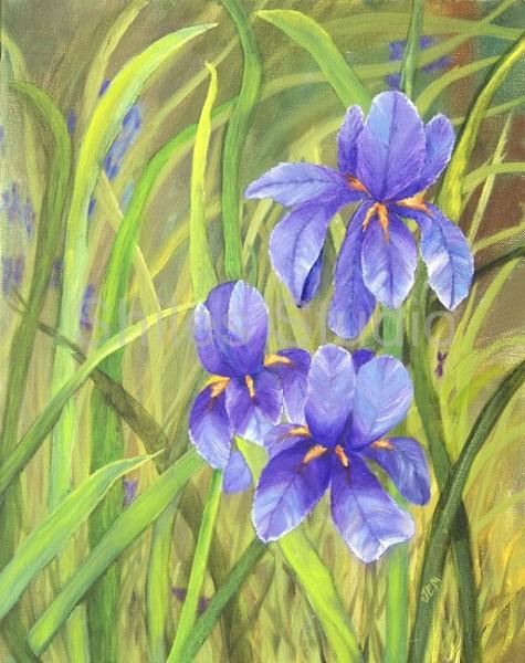 Maine Iris