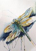 mj dragonfly
