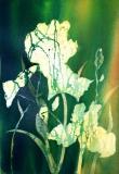 Batik Iris