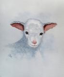 Sweet Baby Lamb