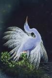Bright Egret