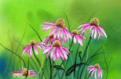 Judy's Cone Flowers