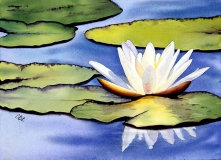 Vibrant Lily